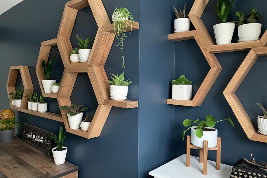 houseplants decor in austin home